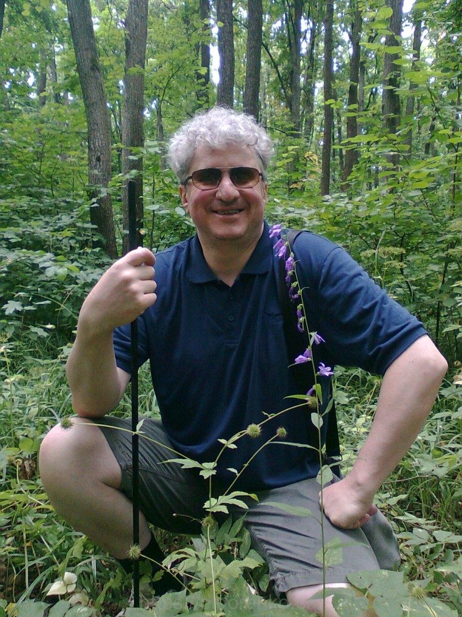 В лесу. Колокольчики